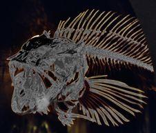 Free Fish Skeleton, Solarized Stock Photo - 87380400