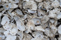 Free Empty Oyster Shells Stock Image - 8740131