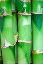 Free Bamboo Stems Royalty Free Stock Photos - 8746808