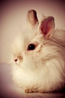 Free White Fluffy Rabbit Stock Photo - 8740190
