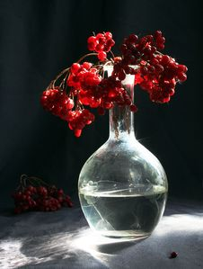 Free The Viburnum. Stock Images - 8740344