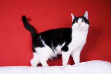 Free Black And White Cat Stock Images - 8740674