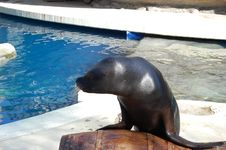 Free Seal At Zoo Stock Images - 8743854