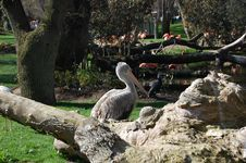 Flamingo Park Stock Photos