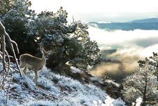 Free Deer At Bryce Canyon Royalty Free Stock Images - 8744359