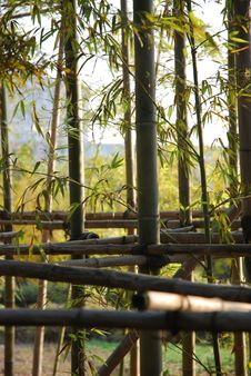 Free Bamboo Stock Image - 8745511