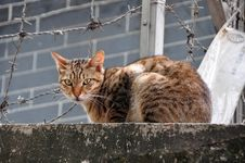 Free Cat On The Wall Stock Photos - 8745793