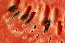 Free Watermelon Close-up Royalty Free Stock Photos - 8746118