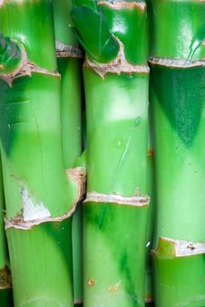 Free Bamboo Stems Royalty Free Stock Photos - 8746808