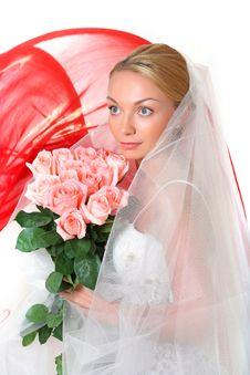 Free Bride Royalty Free Stock Photo - 8748185