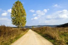 Free Tree And Road Stock Photo - 8749890