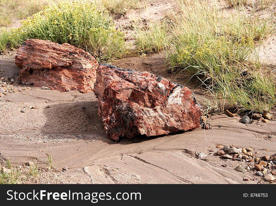 Petrified Wood, Petrified Forest Np, Arizona