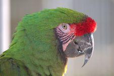 Free Military Macaw Closeup Royalty Free Stock Photo - 87432805