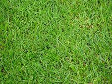 Free Green Grass Stock Photo - 87433110