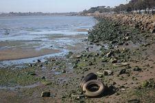 Free Shore Of San Francisco Bay At Gilman St Royalty Free Stock Photos - 87434448