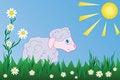 Free Lamb. Vector Stock Photography - 8754012