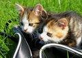 Free Little Kitten Playing Stock Image - 8759101