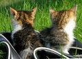 Free Little Kitten Playing Stock Photos - 8759133