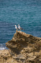 Free Seagulls Royalty Free Stock Images - 8759179