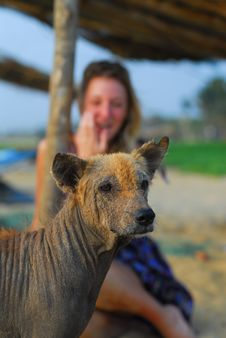 Ugly Dog With Beautiful Blond Girl Royalty Free Stock Photography