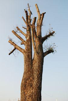 Free Tree Stock Photography - 8751922