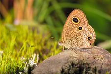 Free Butterfly S Eyes Stock Image - 8752161