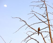 Free Bird In Tree Against The Moon Stock Photography - 8752862