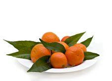 Free Tangerines Stock Photos - 8754253