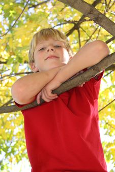Free Boy In Tree Stock Images - 8756734