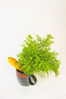 Free Carrots And Fennel Stock Image - 8757451