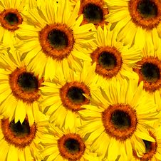 Free Sunflower Abstract Stock Images - 8758164