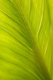 Free Green Leaf Closeup Texture Stock Images - 8758634