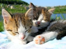Free Little Kitten Sleep Royalty Free Stock Photos - 8759228