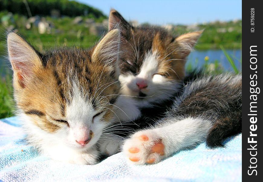 Little kitten sleep