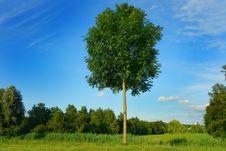 Free PUBLIC DOMAIN DEDICATION Digionbew 10 June July 27-06-16 Lonely Tree LOW RES DSC03303 Stock Photography - 87502842