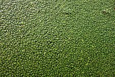 Free PUBLIC DOMAIN DEDICATION, - Digionbew 9. June 19-06-16 - Duckweed LOW RES DSC01517 Royalty Free Stock Images - 87502889