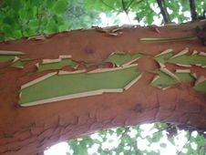 Free Botany, Leaf, Wood, Branch Stock Photos - 87502903