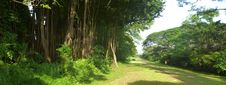 Free P1130123 Expansive Trees Cropped Stock Photography - 87502922