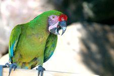 Free Military Macaw 2 Royalty Free Stock Photos - 87503028
