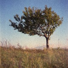 Free Lone Tree Royalty Free Stock Photo - 87503035