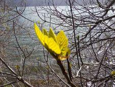Free Natural Landscape, Wood, Twig, Trunk Stock Image - 87585021