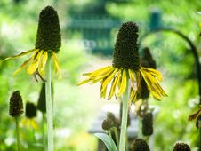 Free Yellow Flower Petals On Seed Heads Royalty Free Stock Photo - 87585685