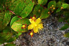 Free PULBLIC DOMAIN DEDICATION - Digionbew 9. June 17-06-16 Yellow Flower LOW RES DSC00340 Stock Image - 87586651