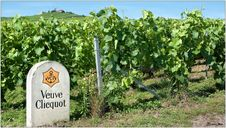 Free The Veuve Clicquot Vineyards In Verzenay, Champagne Royalty Free Stock Image - 87586946