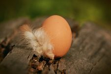 Free Native Egg Beside White Feather On Brown Tree Log Stock Photo - 87588120