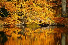 Free Autumnal Colors Royalty Free Stock Photography - 87589487