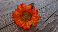 Free Red Sunflower Royalty Free Stock Image - 87589946