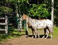 Free Farm Horses Royalty Free Stock Image - 8761046