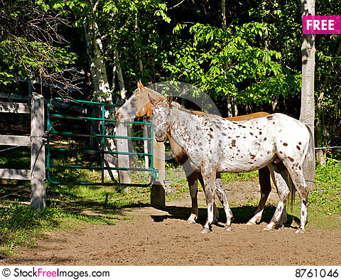 Free Farm Horses Royalty Free Stock Image - 8761046