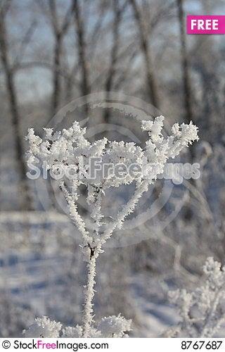 The Snow Stock Photo